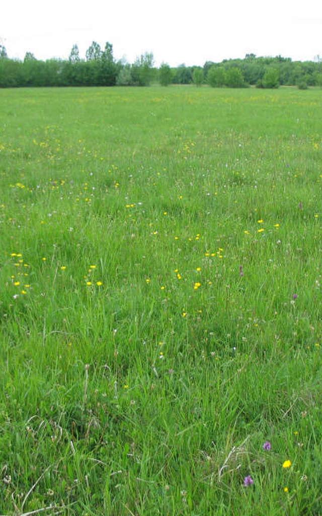 Prairies du Fouzon