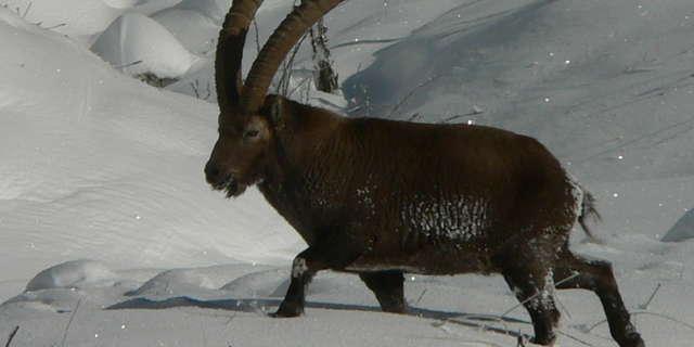 Rando naturaliste : Observation de la faune dans son milieu - groupe