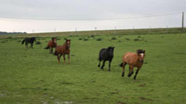 Complexe Equestre du Chemin des Dames