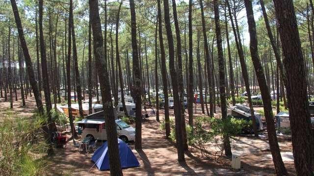 Camping Municipal du Cap de l'Homy