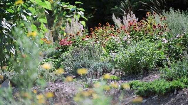 Jardins Plantes médicinales