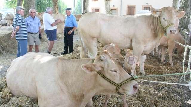 Comice agricole et marché gourmand