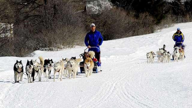 Husky Adventure - Ecole de traîneau à chiens