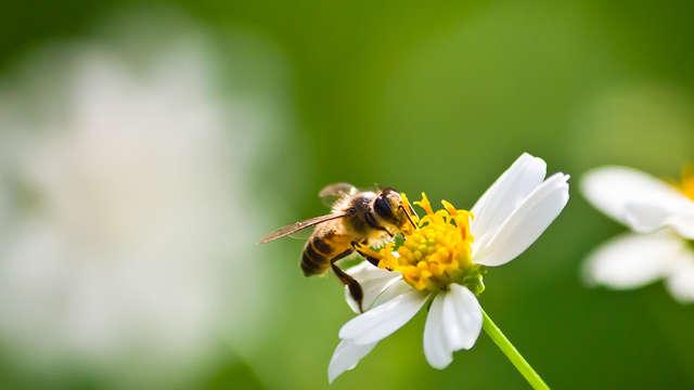 Balade découverte des plantes mellifères et comestibles