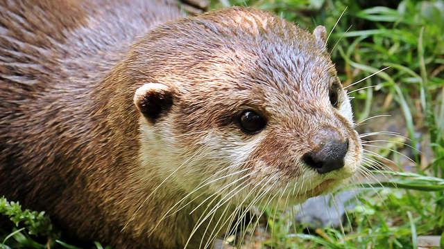 Balade découverte de la faune et flore du Lac de Lavaud Gelade