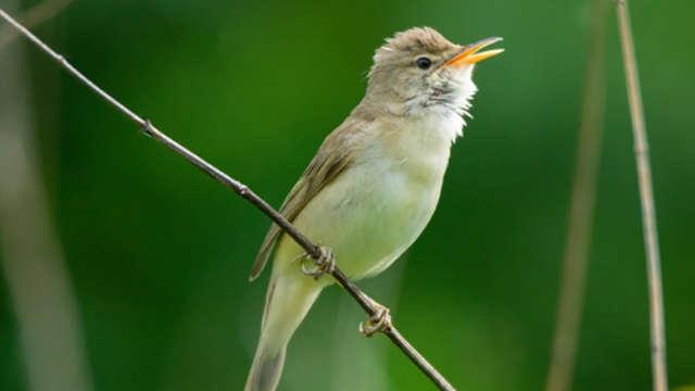 Balade découverte des oiseaux