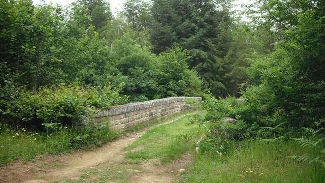 Bois de Lassoux