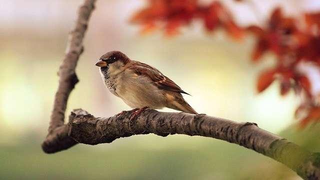 A la découverte des oiseaux nicheur