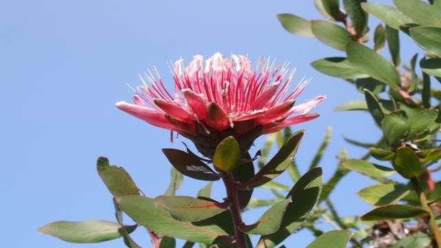 ANNULÉ - Rendez-vous aux Jardins - Jardin exotique et botanique