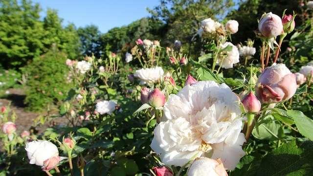 Rendez-vous aux jardins au Jardins de la Peignie