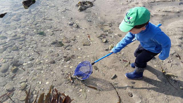 Sortie nature : grande marée - ANNULEE