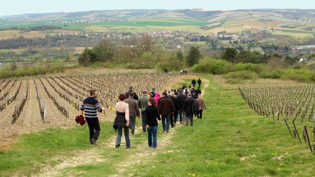 Visite Combinée du Vignoble et des Caves Bailly-Lapierre