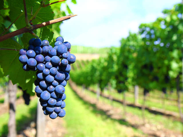 IGP Vin de Bigorre