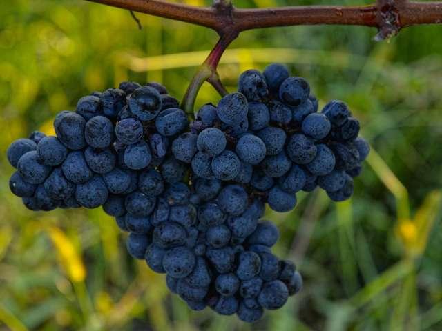 Maison des vins de Madiran
