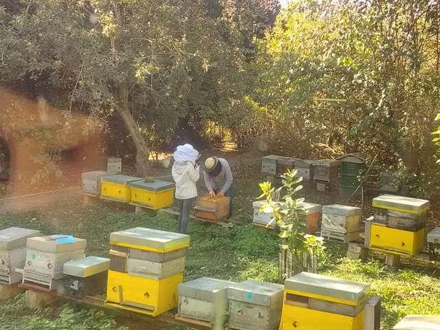 Fête du miel à Chavignon