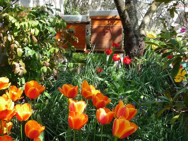 Faire connaissance avec les abeilles de Saint-Jean et fabriquer sa propre bougie !