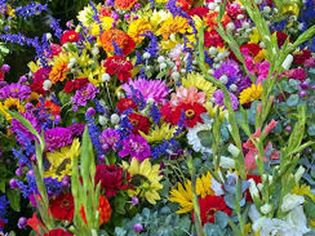 Les Floralies de St Sever de Rustan
