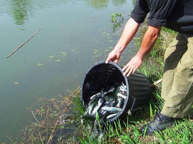 Les plans d'eau de pêche à la truite en Tarn et Garonne