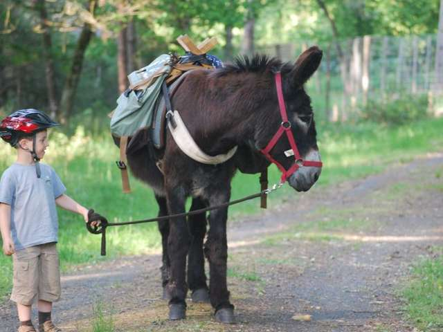Les Ânes de Madame - Balades et randonnées pédestres avec un âne