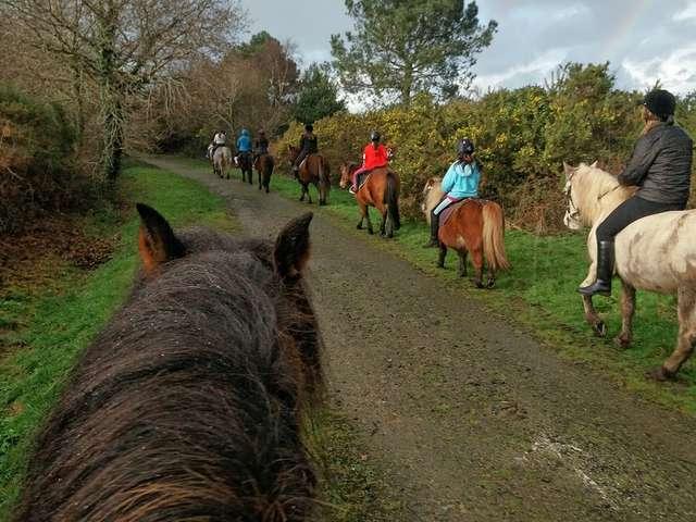 Les poneys de Kerjean - Ferme équestre