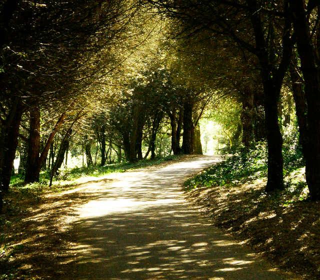 Le chemin de la forêt