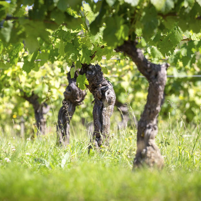 Circuit des vignes