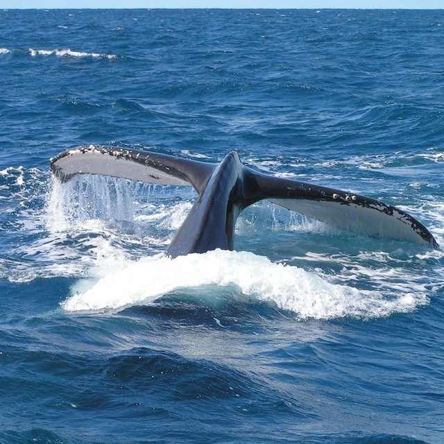 Observation des baleines en voilier en weekend