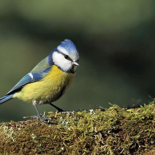 Visite Guidée | Chants d'oiseaux au bois