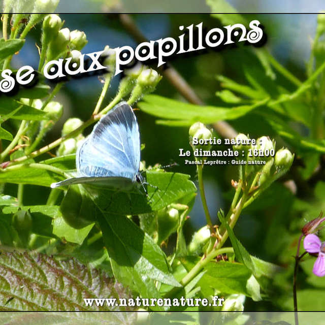 [ANIMATION CONFIRMEE] | Visite – Chasse aux papillons