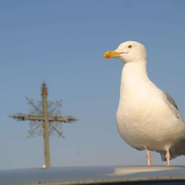 Visite découverte - Les oiseaux du port