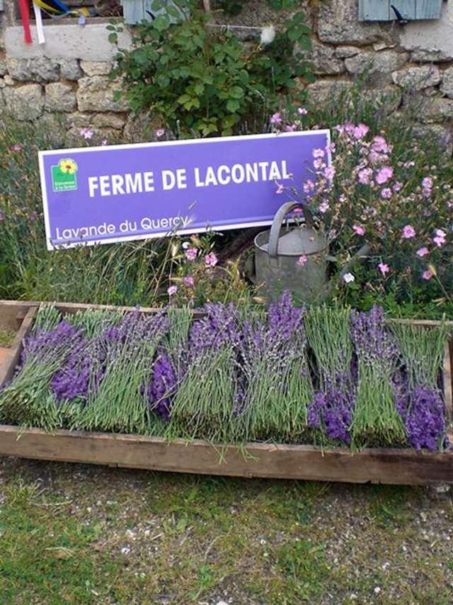 Ferme de Lacontal - Lavande du Quercy