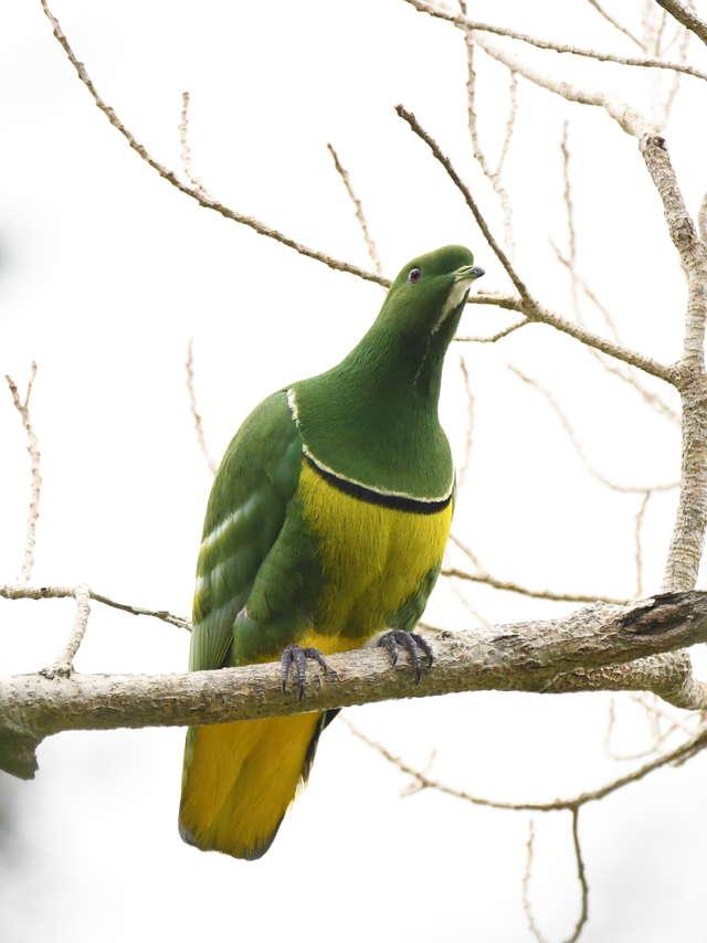 Découverte ornithologique au parc des Grandes Fougères
