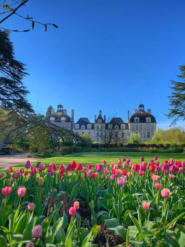 Jardins des Tulipes du château de Cheverny