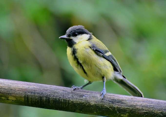 Le Salon des Oiseaux de Jardins