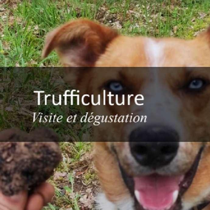 Les Mercredis Visite de Truffière