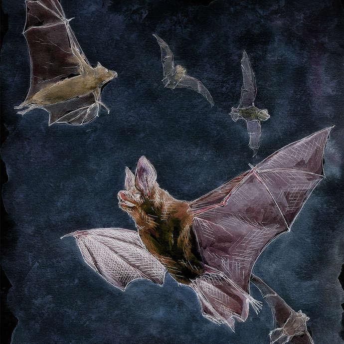 Semaine de la nuit : Nuit de la chauve-souris