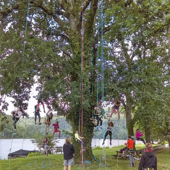 été actif : grimpe d'arbres