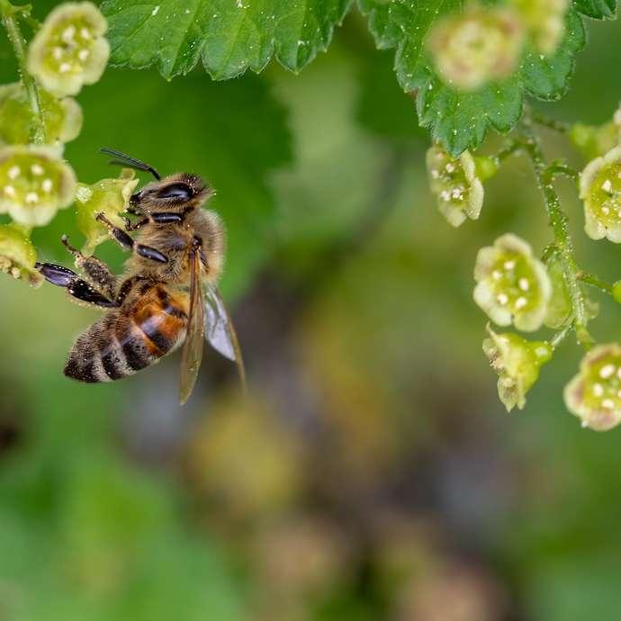 Soirée nature - thème : les pollinisateurs