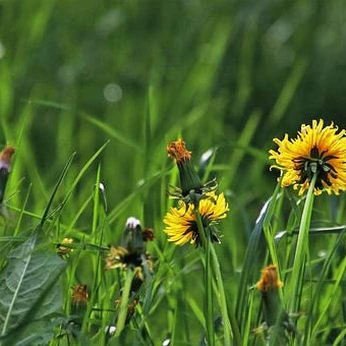 Terre en vert: sortie plantes sauvages comestibles