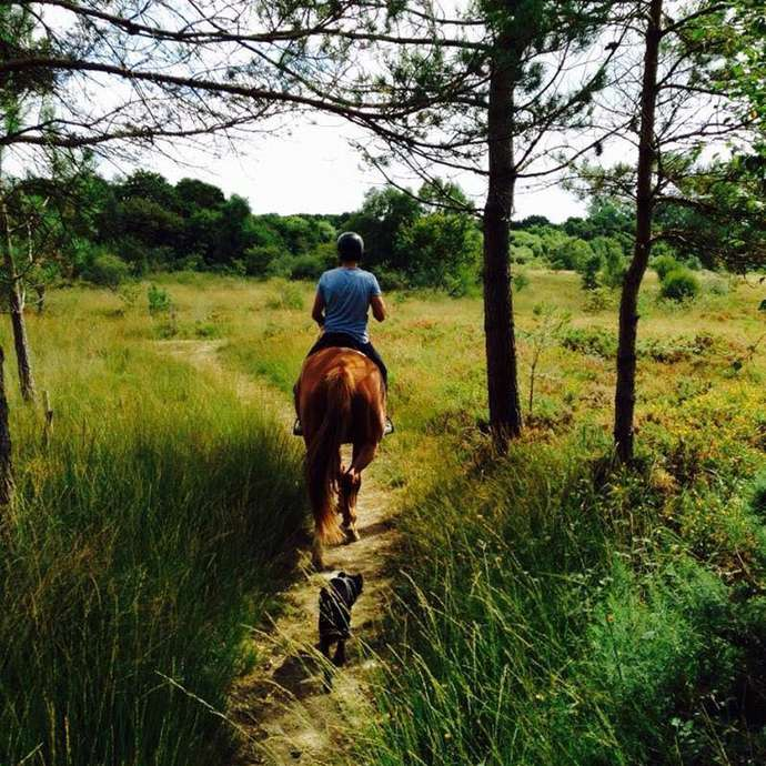 Lamballe Equitation