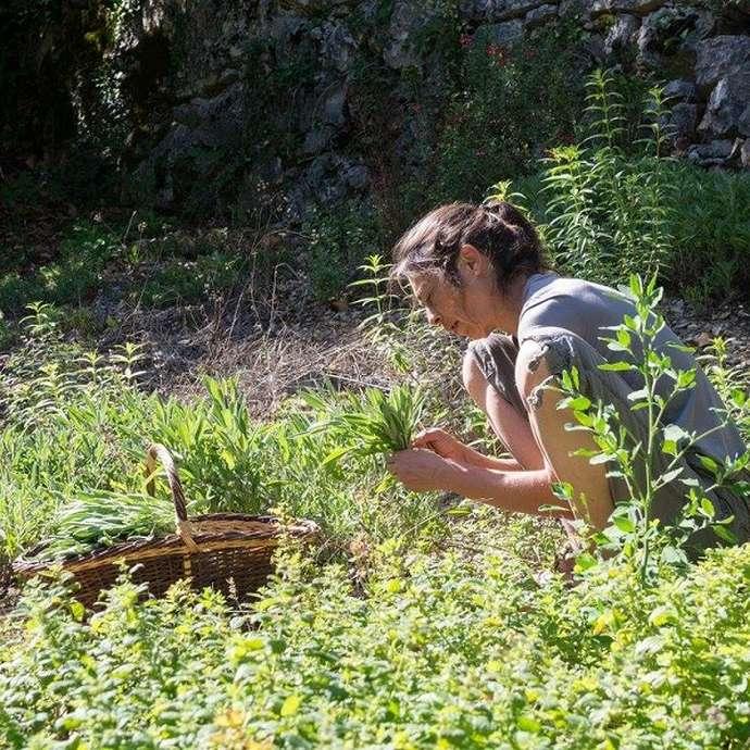 Dumas Sylvie - Plantes aromatiques