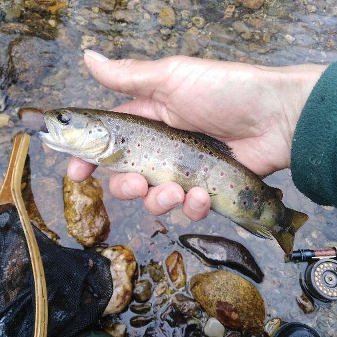 Pêche Passion Grands Causses