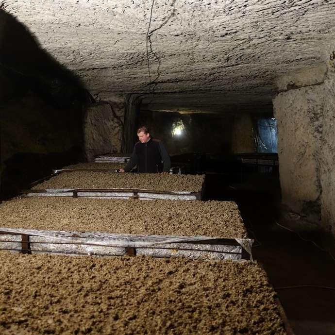 Visitez la champignonnière d'Orbec !